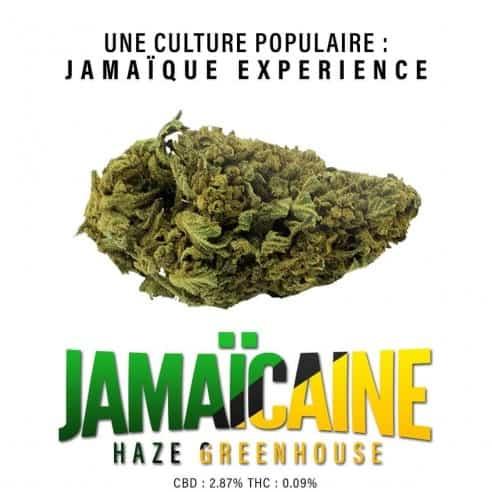 Fleurs CBD - Jamaïcaine Haze Greenhouse